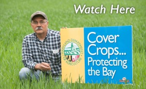 Cover crops Bluestem Farm Chestertown Farm Manager Evan Miles